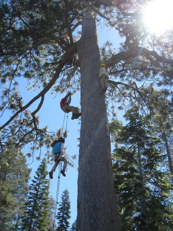 Tree climb 2