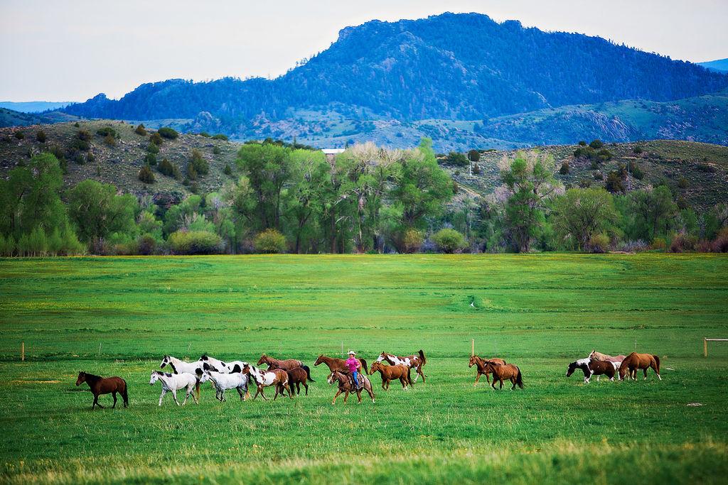 Bcr landscape wrangler gallop