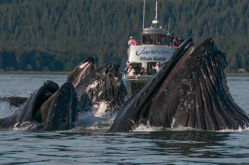 Scottm whale watch