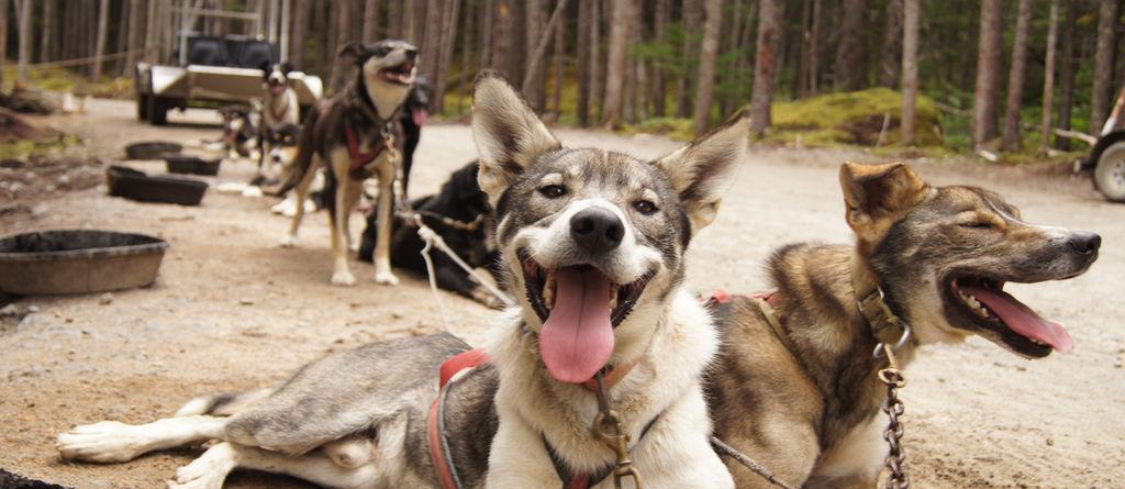 Sled dog discovery tour slide