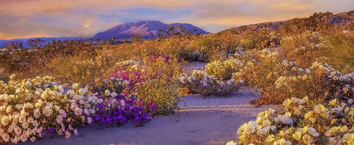 Hero spring anza borrego desert state park  ca